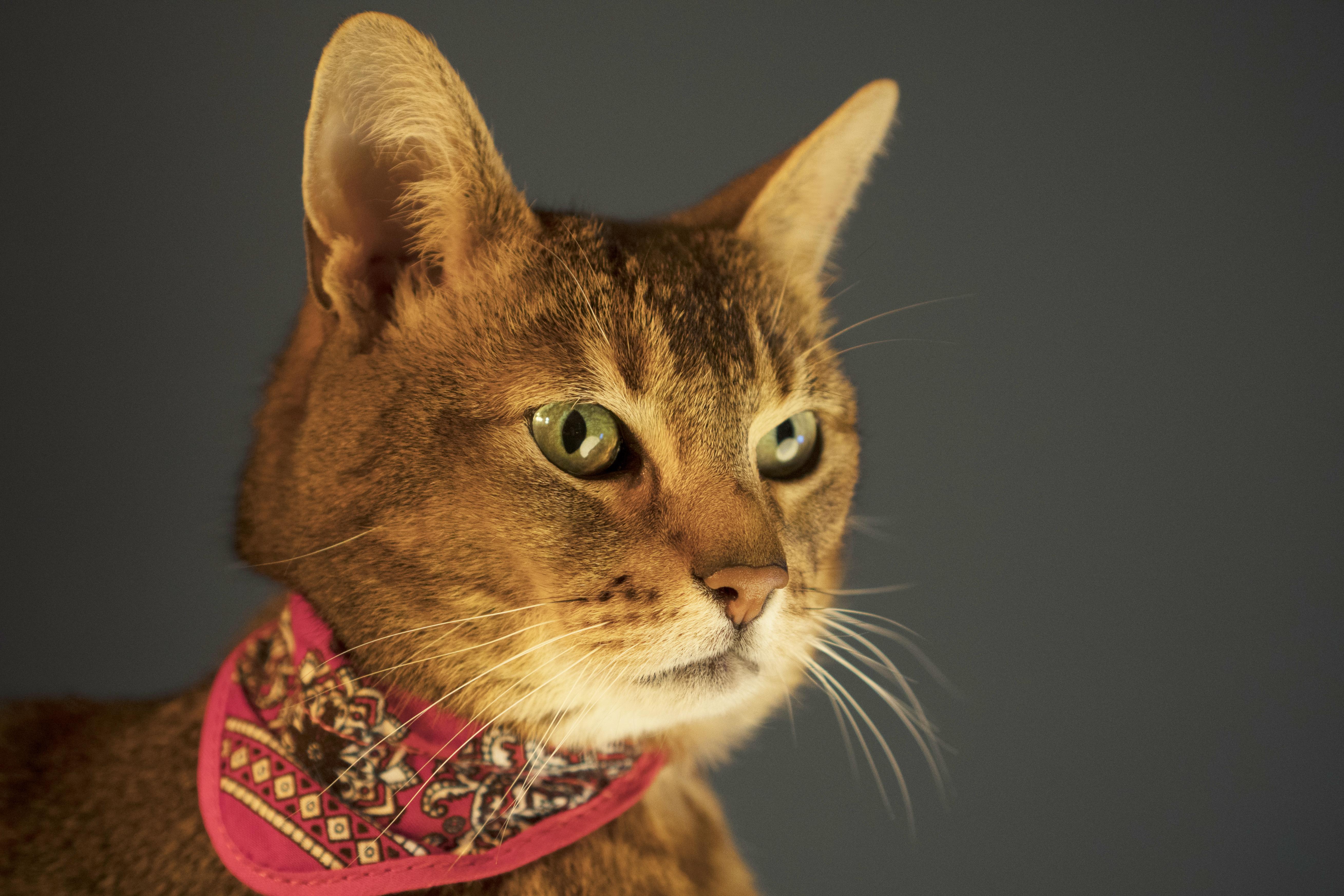 Huisdierenfotografie kattenfoto Caroline Vlietstra Content Creator