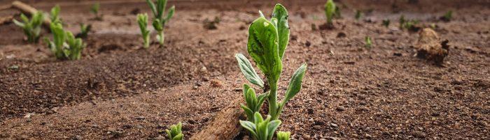 Justdiggit, graven voor een groenere en koelere planeet.